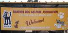 Skiathos Dog Shelter Banner New for 2017 4